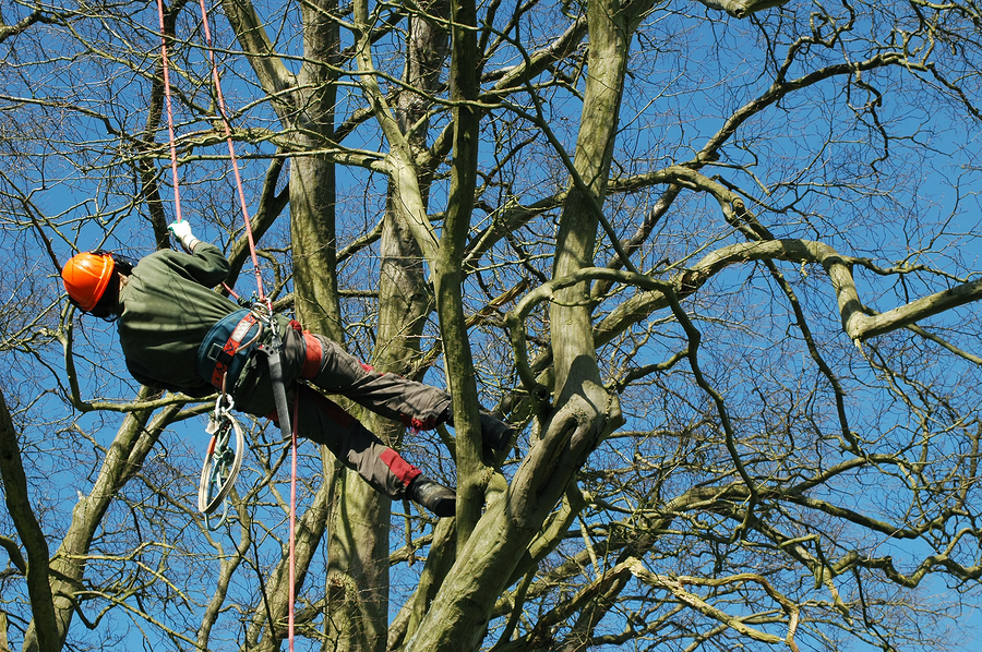 Picture of a tree surgeon in portsmouth