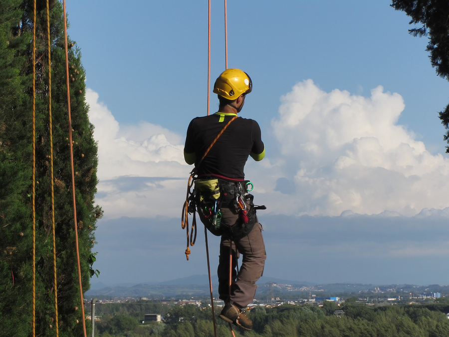 Picture of professional tree surgeons in portsmouth on tree rigging gear
